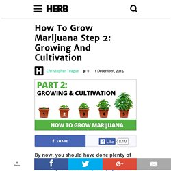 How To Grow Marijuana Step 2: Growing And Cultivation