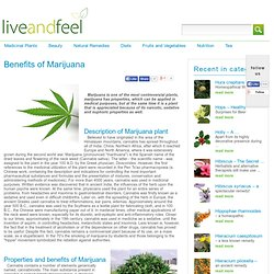 Marijuana | Health Benefits of Marijuana | Marijuana Plant