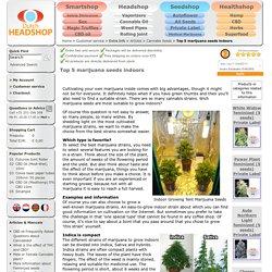 Top 5 marijuana seeds indoors - Cannabis Seeds