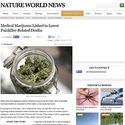 Medical Marijuana Linked to Lower Painkiller-Related Deaths