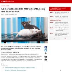 La marijuana rend les rats fainéants, selon une étude de UBC