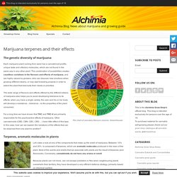 Marijuana terpenes and their effects - Alchimia blog