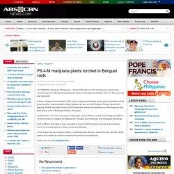 P9.4-M marijuana plants torched in Benguet raids