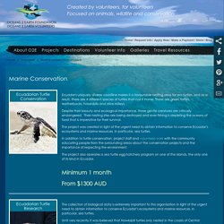 Marine Conservation – A Safe Option for Aquatic Animals