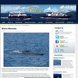 Marine Mammals -