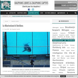 Le Marineland d'Antibes - Dauphinlibre.be
