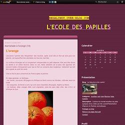 Marmelade à l'orange (14) - Le blog de la tite cuisto!