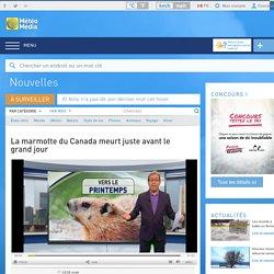 La marmotte du Canada meurt juste avant le grand jour