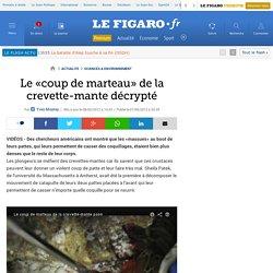 Le «coup de marteau» de la crevette-mante décrypté