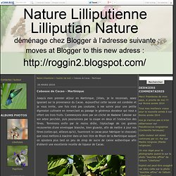 Cabosse de Cacao - Martinique - Nature Lilliputienne