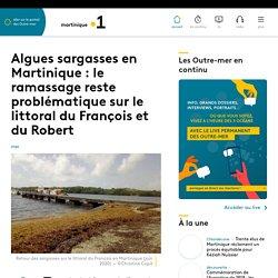 Algues sargasses en Martinique : son ramassage reste problématique...