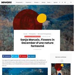 Sanja Marusic, Flowers in December d'une nature fantasmé