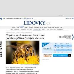 Největší včelí masakr. Přes zimu pomřela pětina českých včelstev