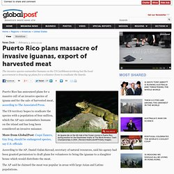 Puerto Rico plans massacre of invasive iguanas, export of harvested meat