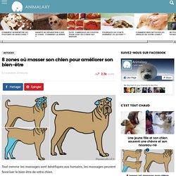 8 zones où masser son chien pour améliorer son bien-être - Animalaxy