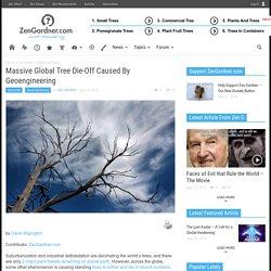Massive Global Tree Die-Off Caused By Geoengineering - Zen Gardner