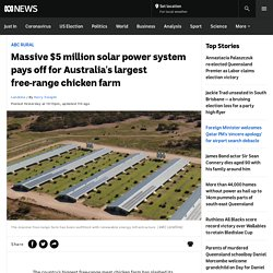 Massive $5 million solar power system pays off for Australia's largest free-range chicken farm - ABC News
