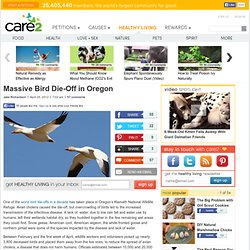 Massive Bird Die-Off in Oregon