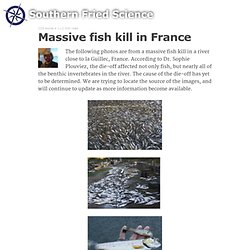 "Massive fish kill in France - ""Southern Fried Science"" - USA"