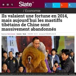 Ils valaient une fortune en 2014, mais aujourd'hui les mastiffs tibétains de Chine sont massivement abandonnés