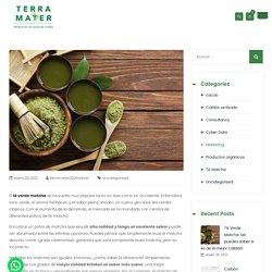 Té Verde Matcha: así puedes saber si es de la mejor calidad - Terramater