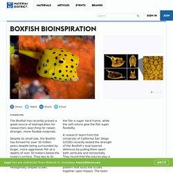 Boxfish Bioinspiration - MaterialDistrict