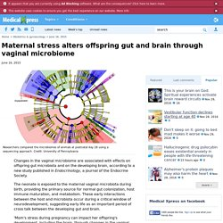 Maternal stress alters offspring gut and brain through vaginal microbiome
