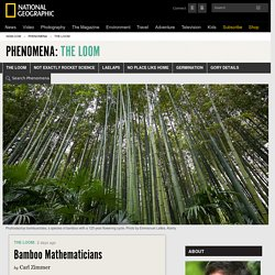 Bamboo Mathematicians