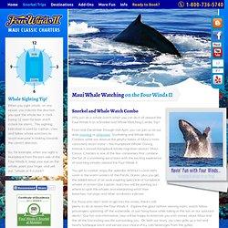 Maui Snorkel and Whale Watch - Four Winds Maui