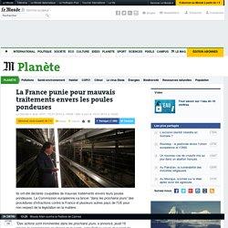 La France punie pour mauvais traitements envers les poules pondeuses