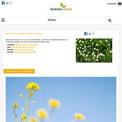 Mauvaises herbes : bienfaits et vertus pour la santé