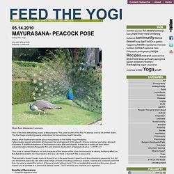 Mayurasana- Peacock Pose | Feed The Yogi