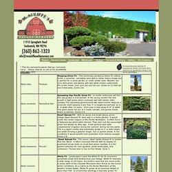 McAuliffe' s Valley Nursery - Snohomish, WA- Conifers, Shrubs and Grasses - McAuliffe's Valley Nursery