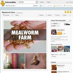 Mealworm Farm - All