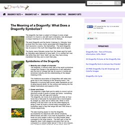 The Meaning of a Dragonfly: What Does a Dragonfly Symbolize?
