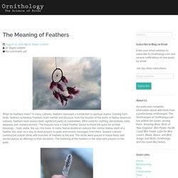 The Meaning of Feathers – Ornithology