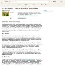 Exploring the Basic of Proper Tree Care