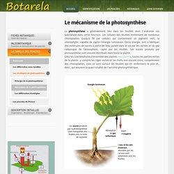 Mecanisme de la photosynthese