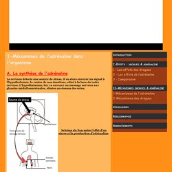 1-Mécanismes de l'adrénaline dans l'organisme - L'adrénaline