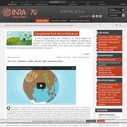INRA 11/02/16 Mécanismes de résistance des plantes aux maladies