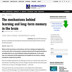 The mechanisms behind learning and long-term memory in the brain
