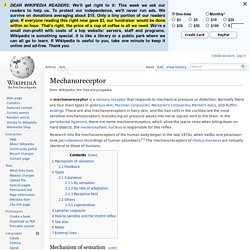 Mechanoreceptor