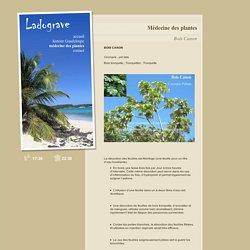 Bois Canon - Médecine des plantes - LADOGRAVE