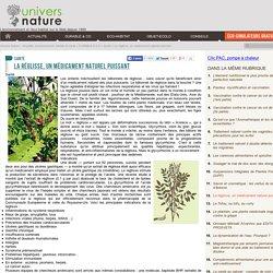 La réglisse, un médicament naturel puissant