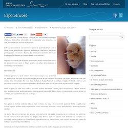 Medicina Felina » Esporotricose