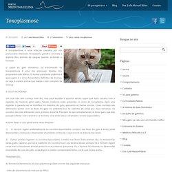 Medicina Felina » Toxoplasmose