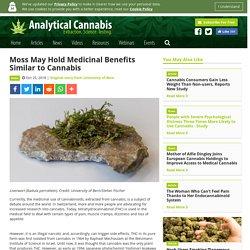 Moss May Hold Medicinal Benefits Similar to Cannabis