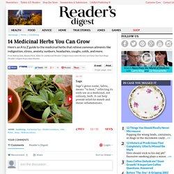 14 Medicinal Herbs You Can Grow