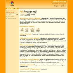 medicinal herbs: FRENCH MARIGOLD - Tagetes patula