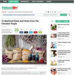 15 Medicinal Plants And Herbs From The Cherokee People